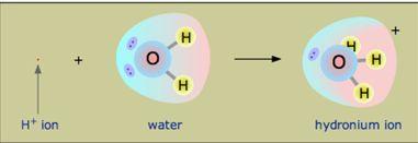 شاردة الهيدرونيوم