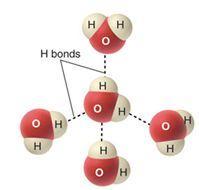 water H bonds